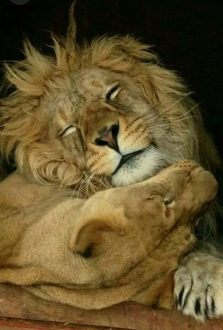 Рабочий, открытки моему львенку