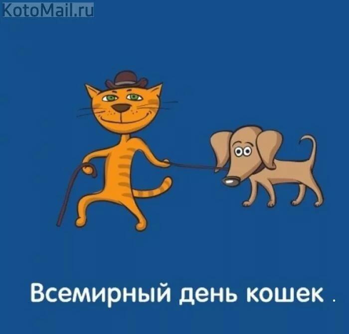 Картинки братьев, день кошек смешные открытки