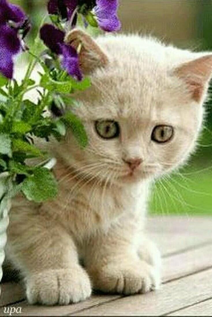 Милые анимашки кошечки