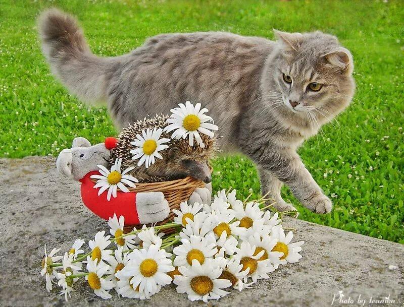 инструментами, доброе утро и хорошее настроение картинки от кота регулярные лекции
