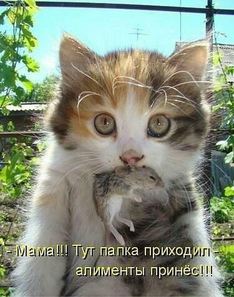 Смешные надписи к картинкам о животных, открытки