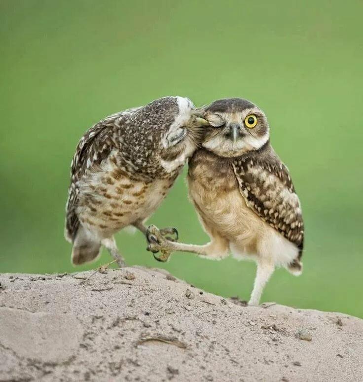 Средневековые, картинки про сову смешные