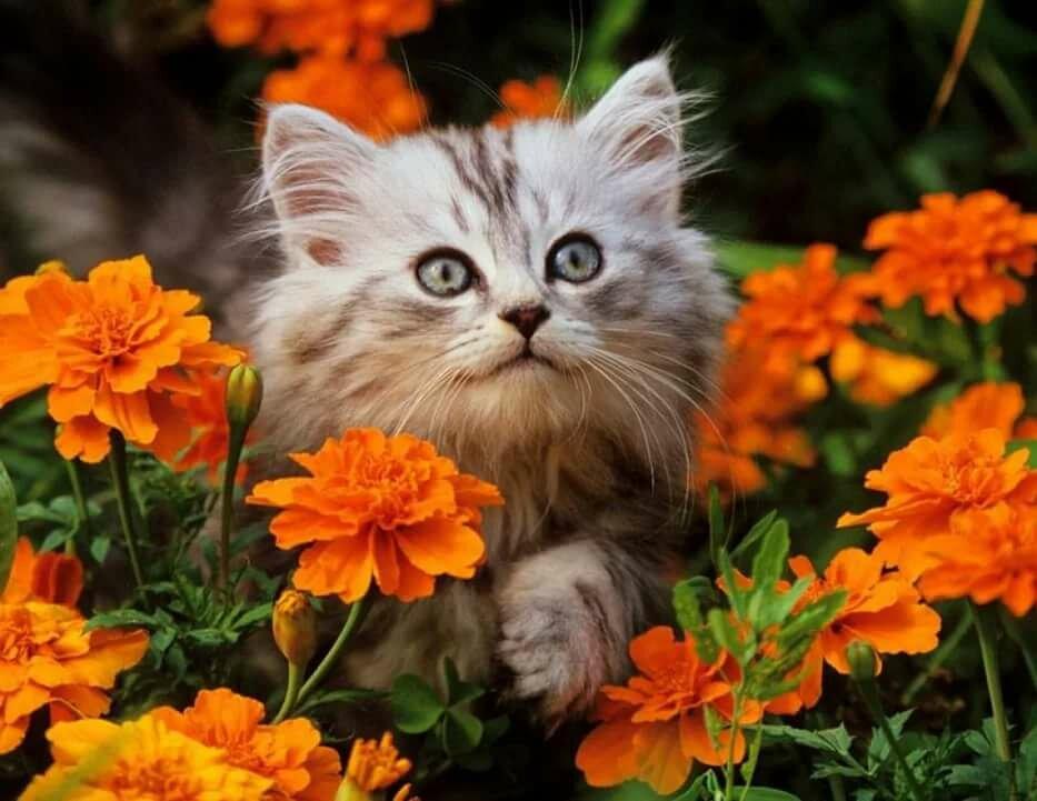 Цветы и кошки картинки, открытки