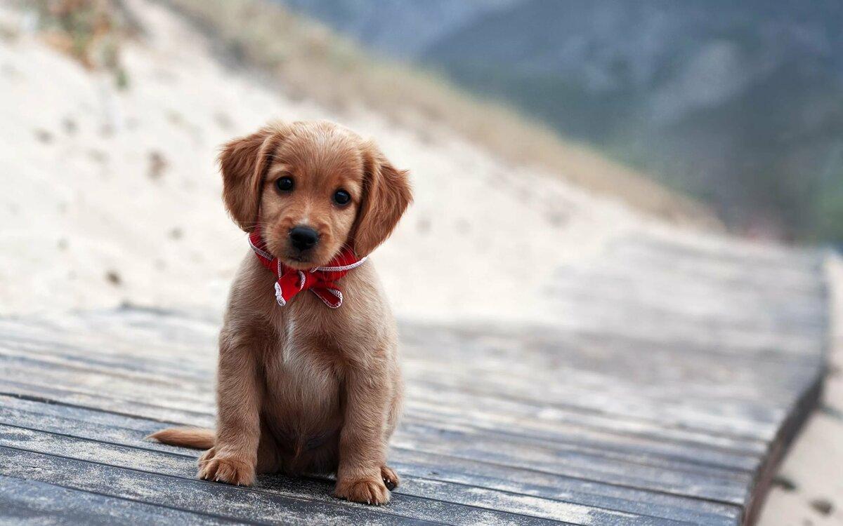 картинки с собачками милыми