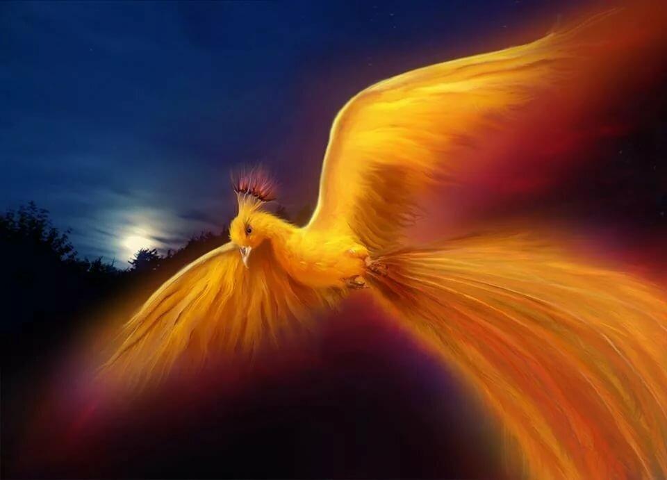 феникс летит картинка покрыта