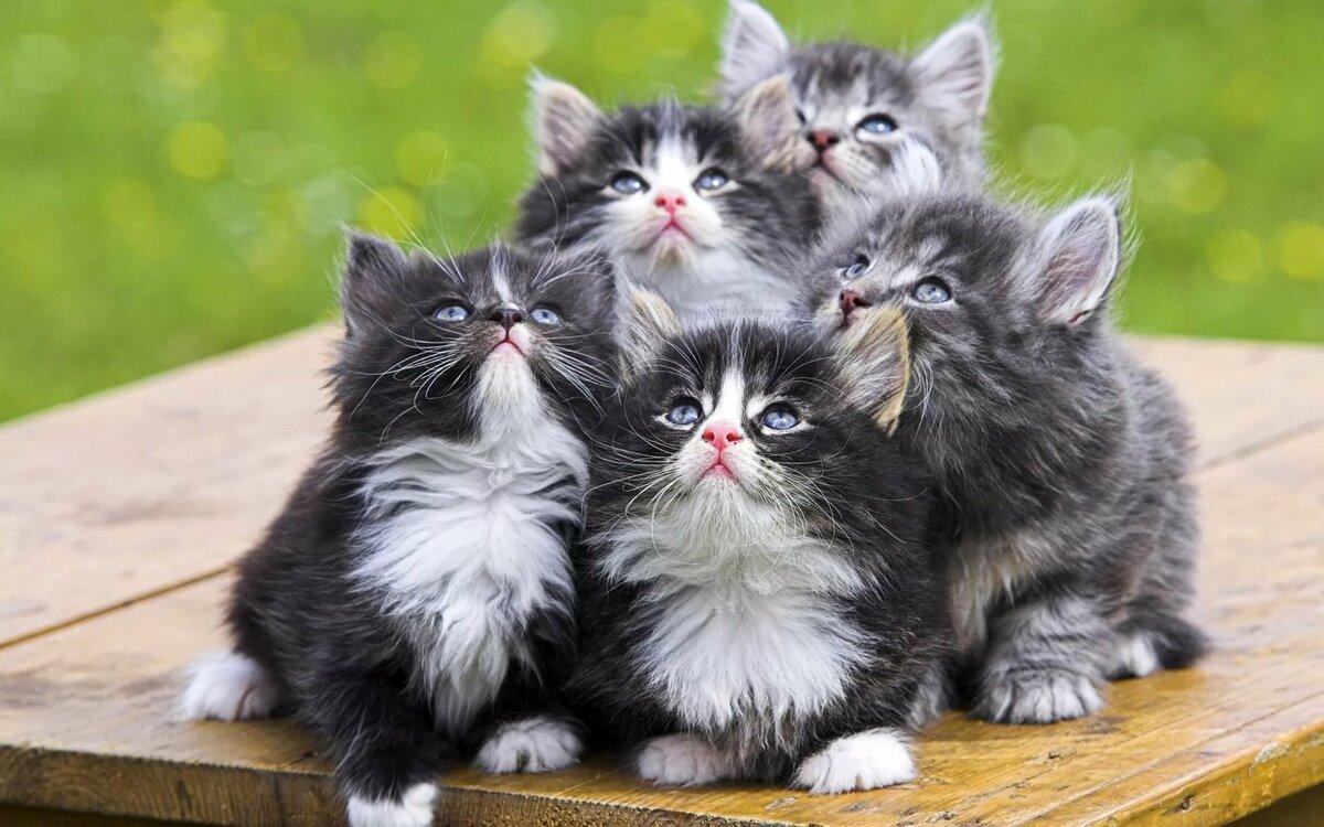 фотосессия, либо кошки фото красивые и смешные дома, особняки