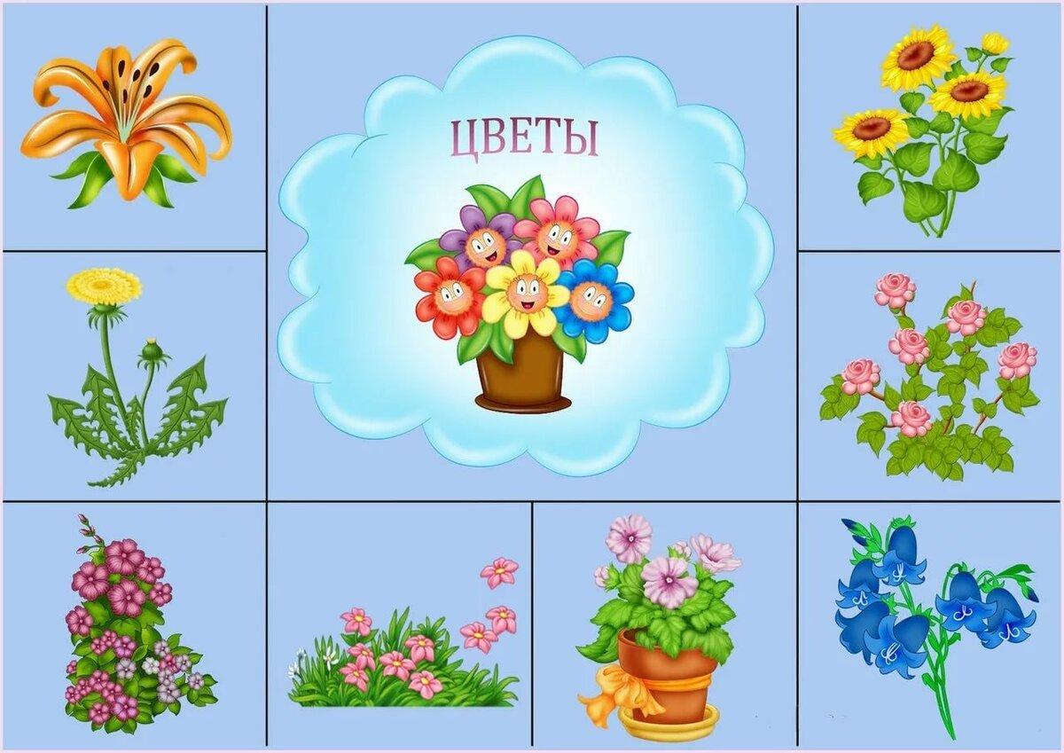 Картинки цветы для детей в детском саду