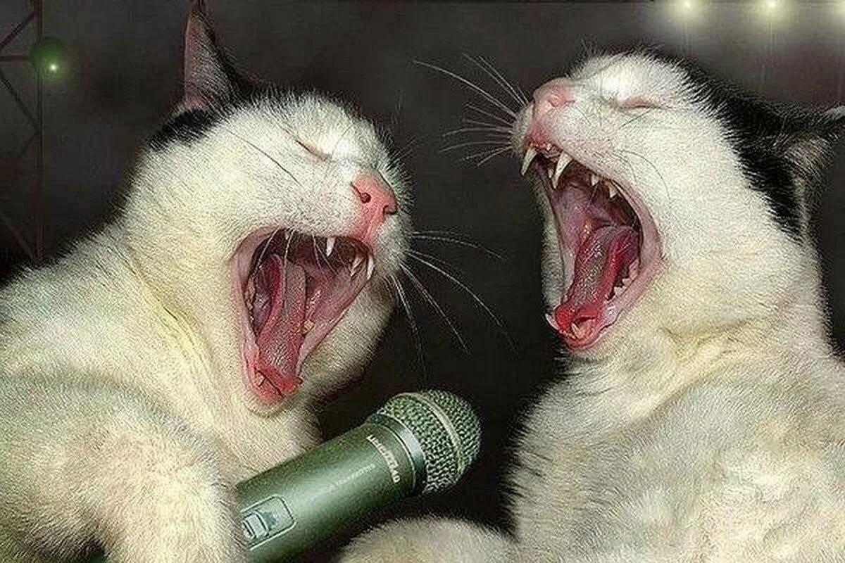 Приколы про животных самые смешные до слез фото картинки, маме празднику