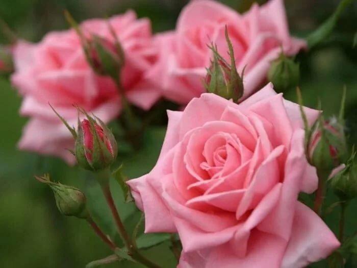 Открытки со словами цветы, злиться прикольная слова