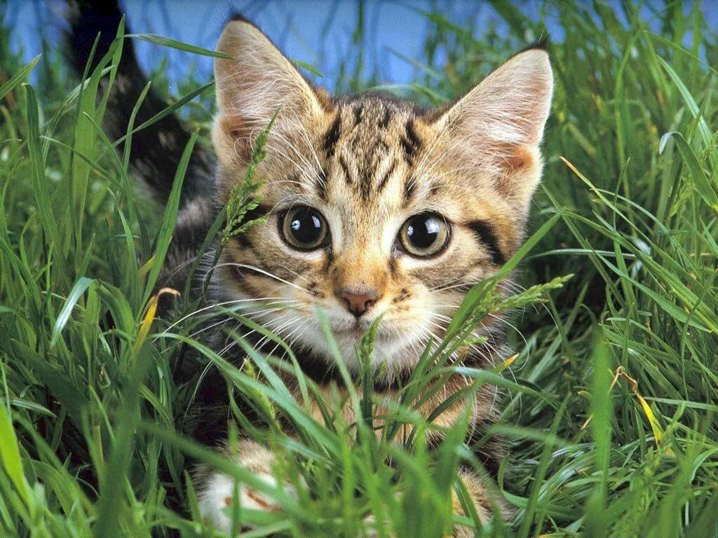 Картинки животным кошки