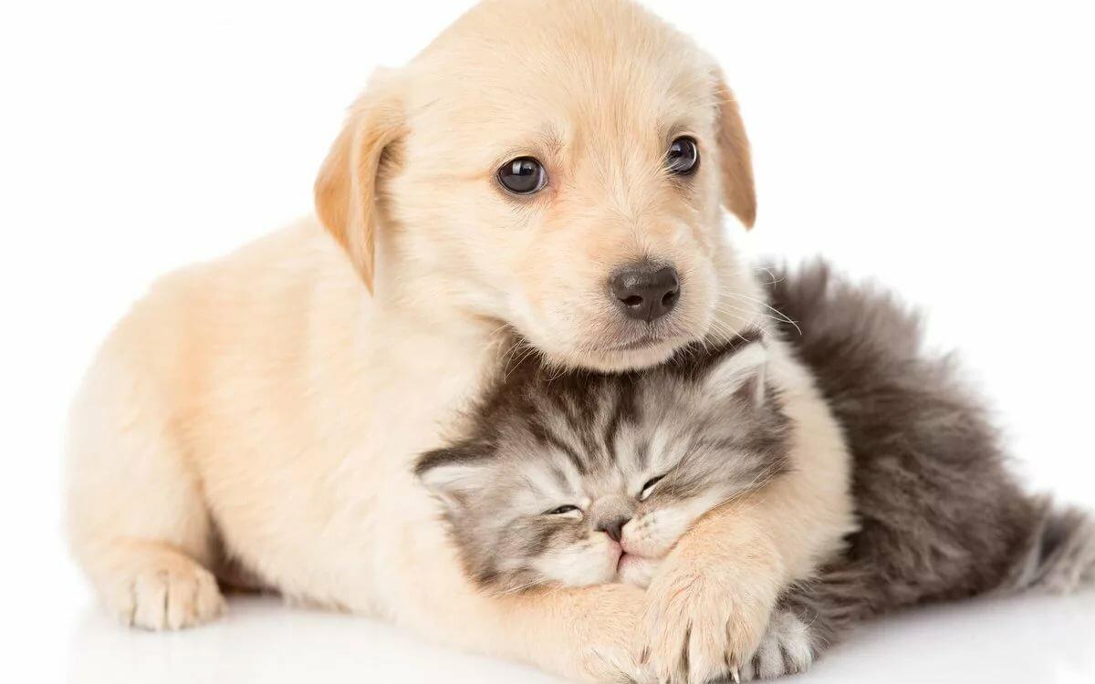 Открытки с маленькими собаками, надписями радости как