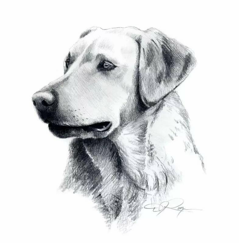 Картинки животные нарисованные простым карандашом