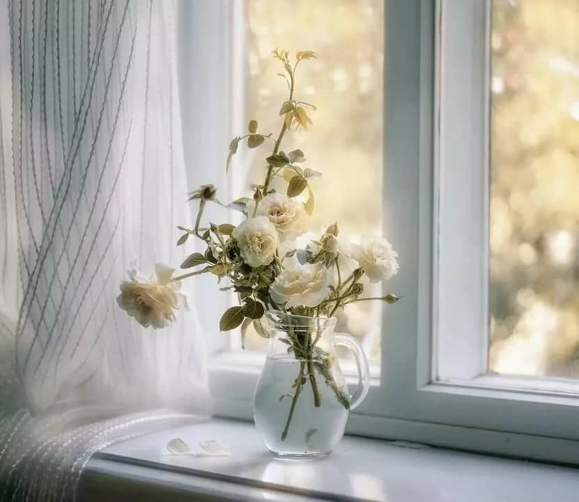 красивые картинки окно с цветами надо