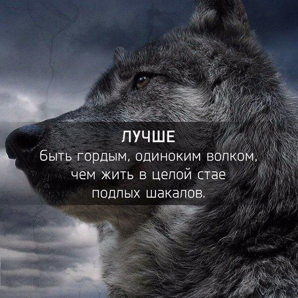 картинки с надписью о волках видели глаза моего