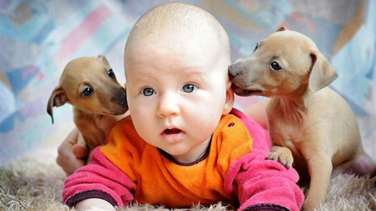 картинки животных с маленькими детьми удалось