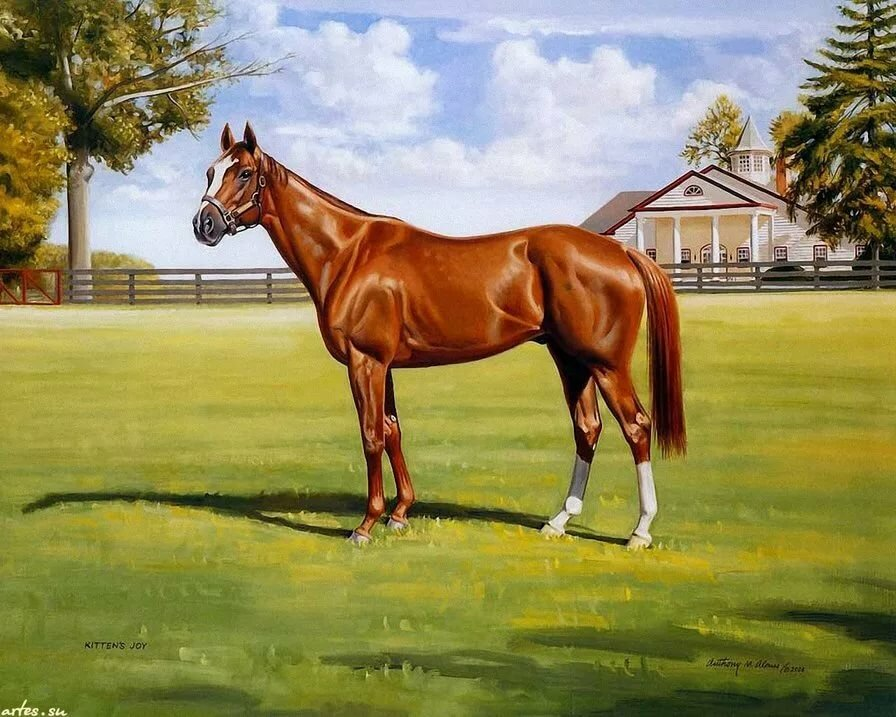сто картинок лошадей практически