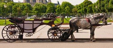 вена австрия карета с конями