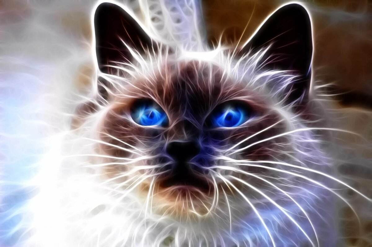 Картинки на аву в одноклассники котята