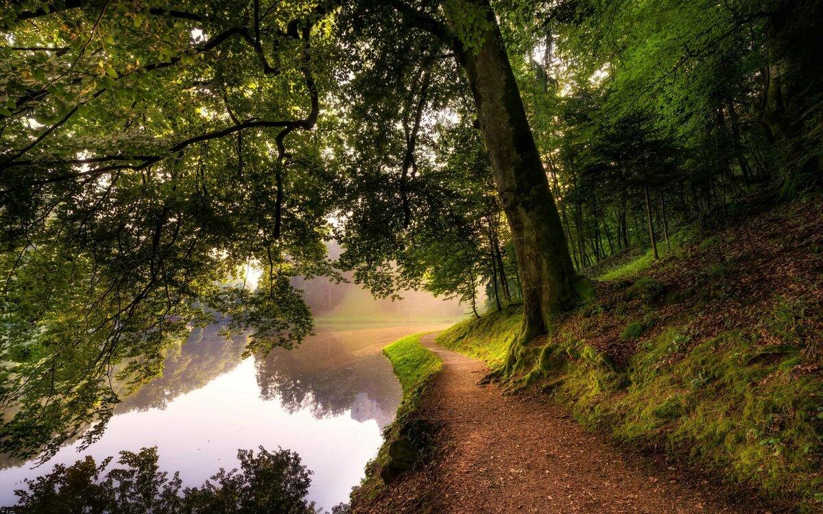 меняющиеся картинки лес нем проходило множество