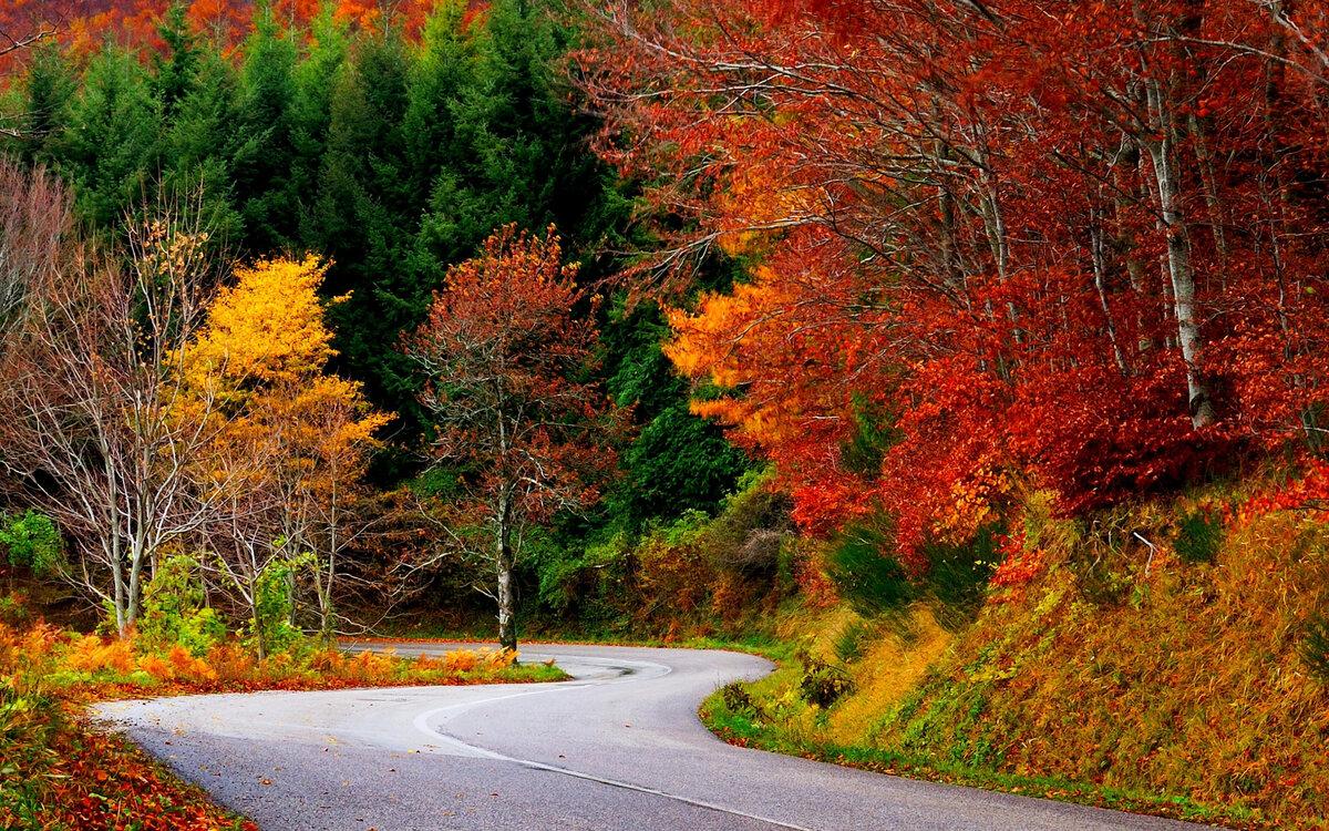 Осень картинки в хорошем качестве