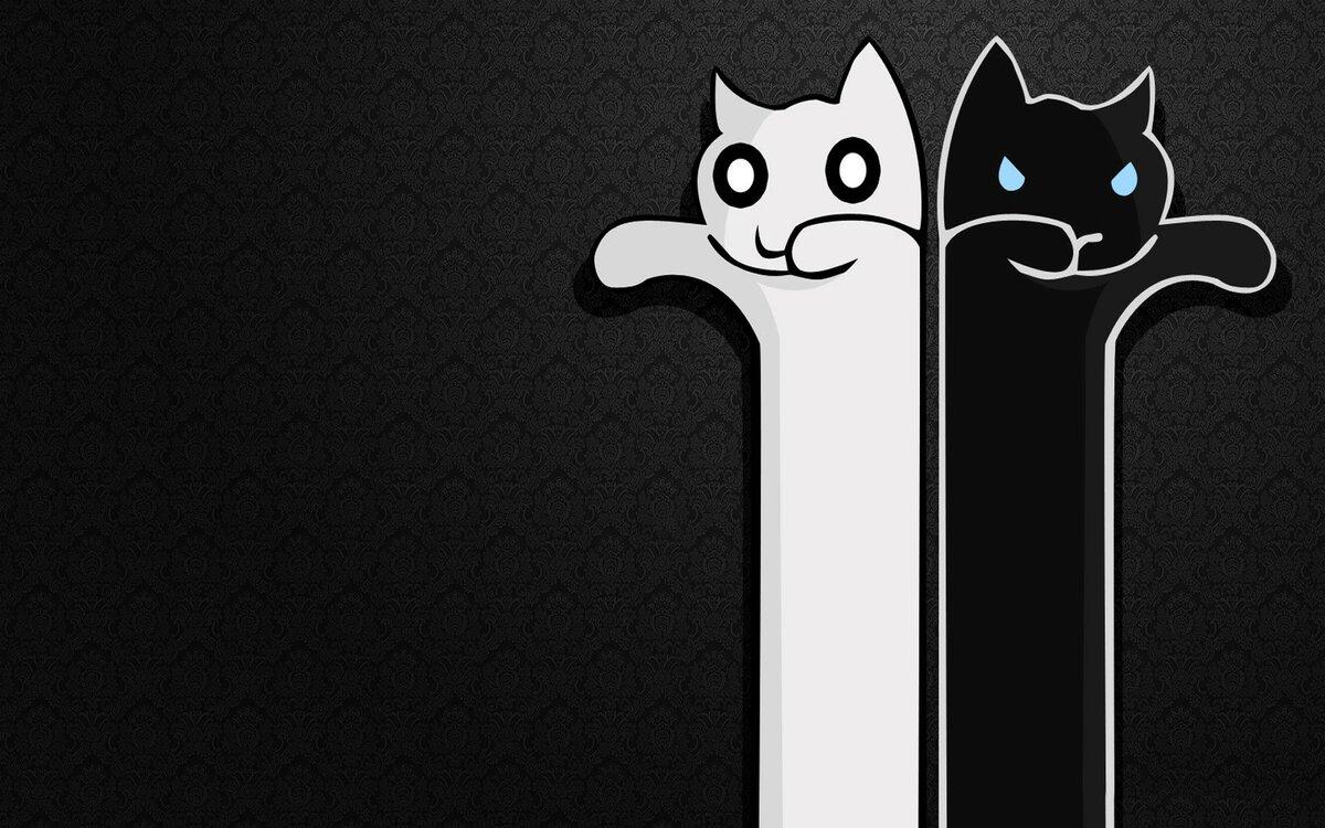 Картинки с кошками и надписями на черном фоне, лечу тебе