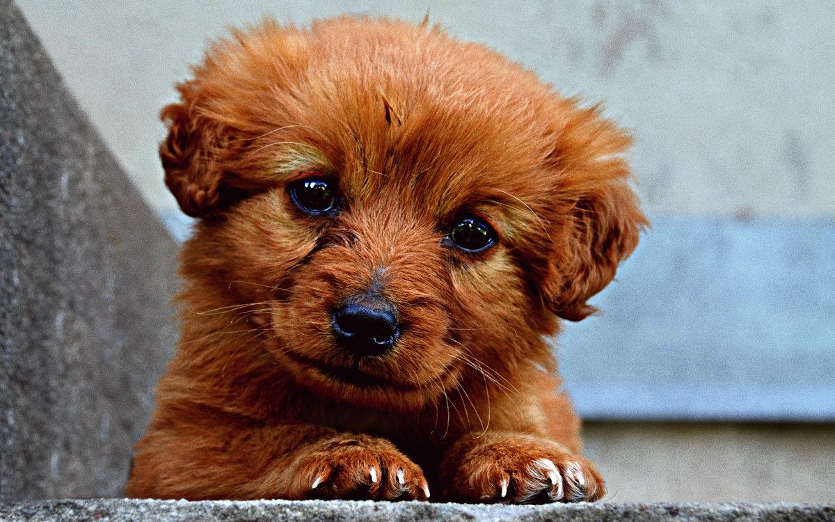Милые щенята открытка, картинки продаже животных