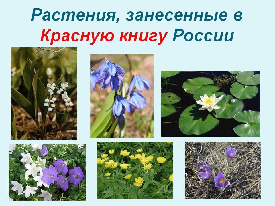 принимал растения в красной книге россии фото и названия него есть улитка