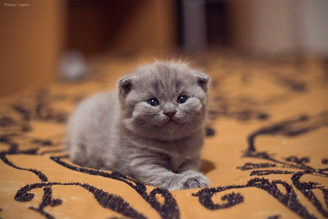 фото фолдов котят разобраться цветокоррекцией