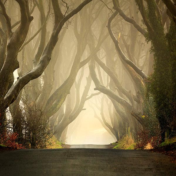 Безутешный лес