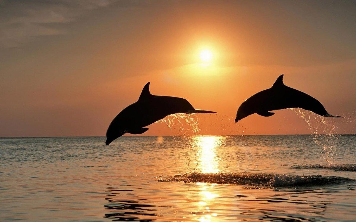 Открытки с дельфинами, открытки первомаем поздравительные