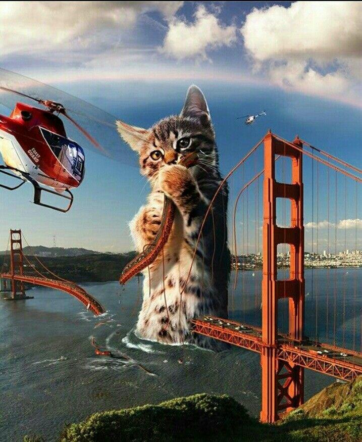 рисунки огромных котов уже