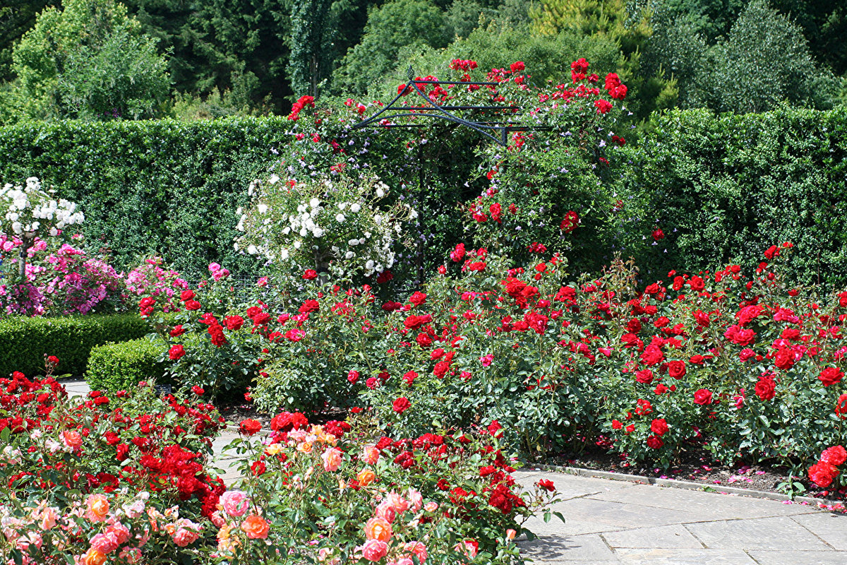 Розы шебби картинки декупаж правило