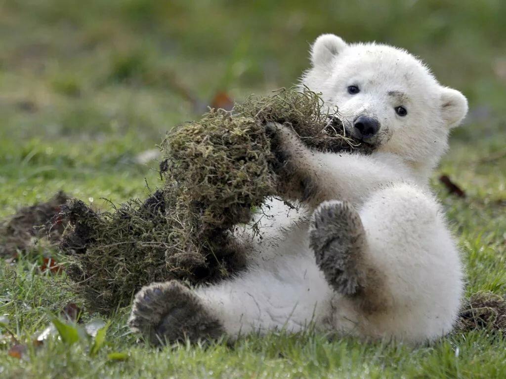 Фотки с медвежатами милые