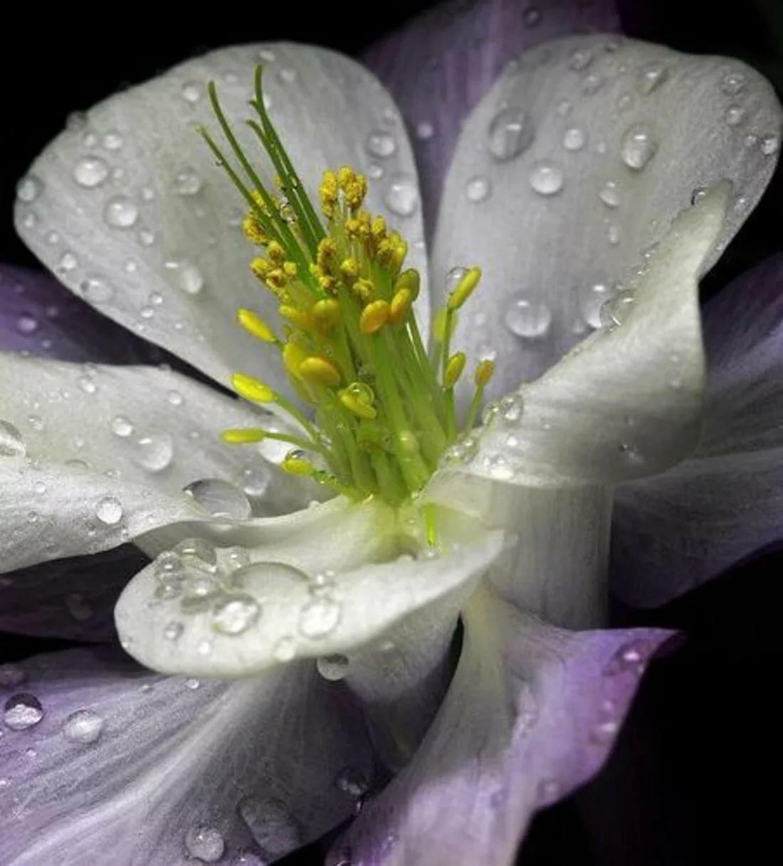 черно белое фото цветов в росе одним