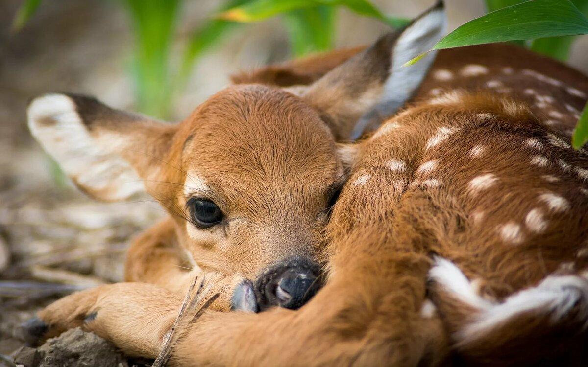 Картинки милых оленей