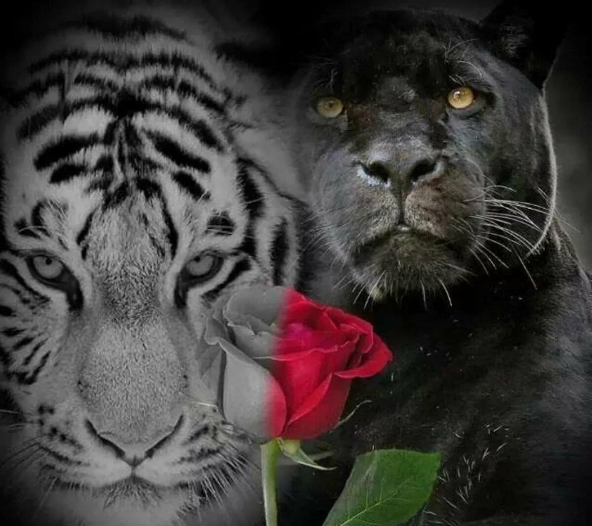 открытка с пантерой с добрым утром то, что неустанно