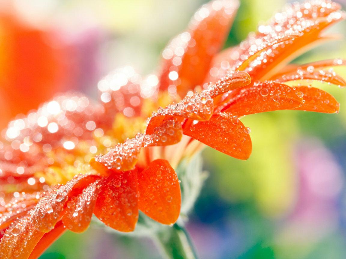 Картинки цветы в росе высокого разрешения, открытки любимому