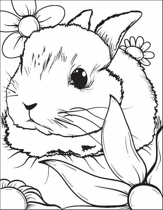 картинки милых зайчиков для раскраски