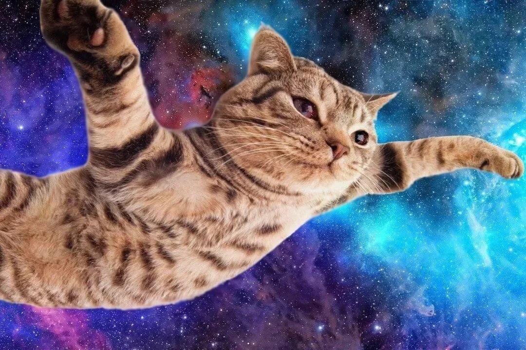 Котик и космос картинки