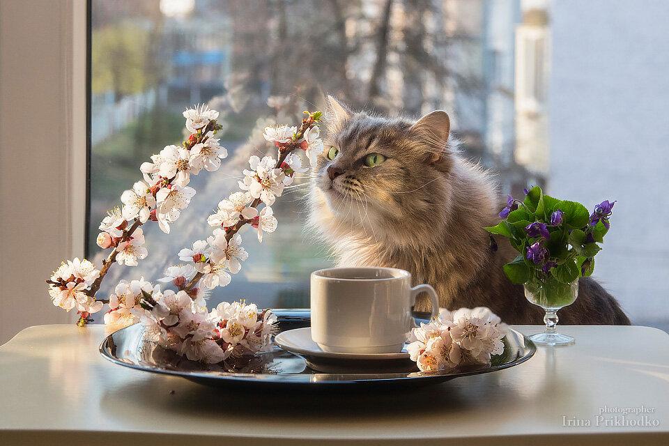 обучение картинки кошек доброе утро отличная