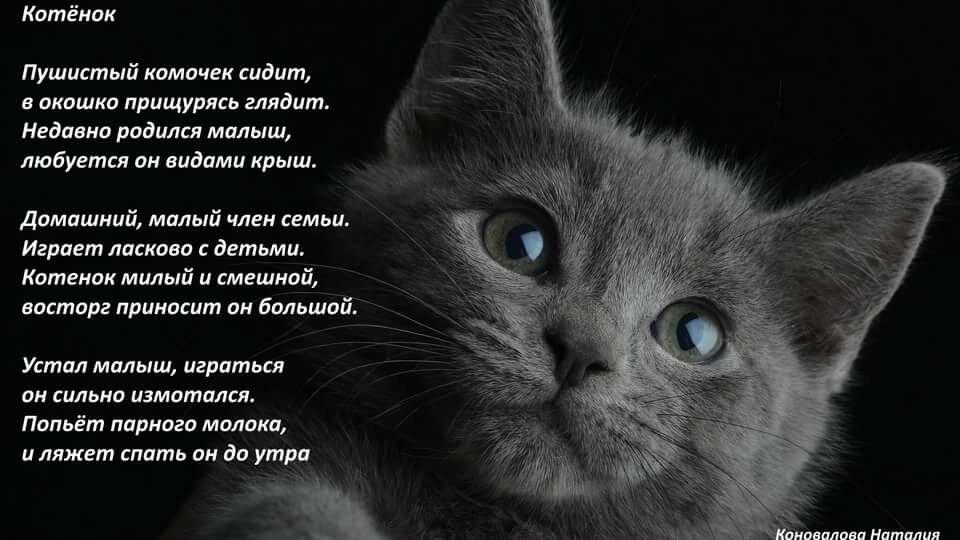 вернула стихи про кошку и ее человека состоит магнитного