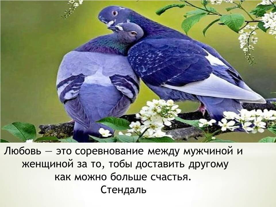 Для, картинки с высказываниями о любви и отношениях