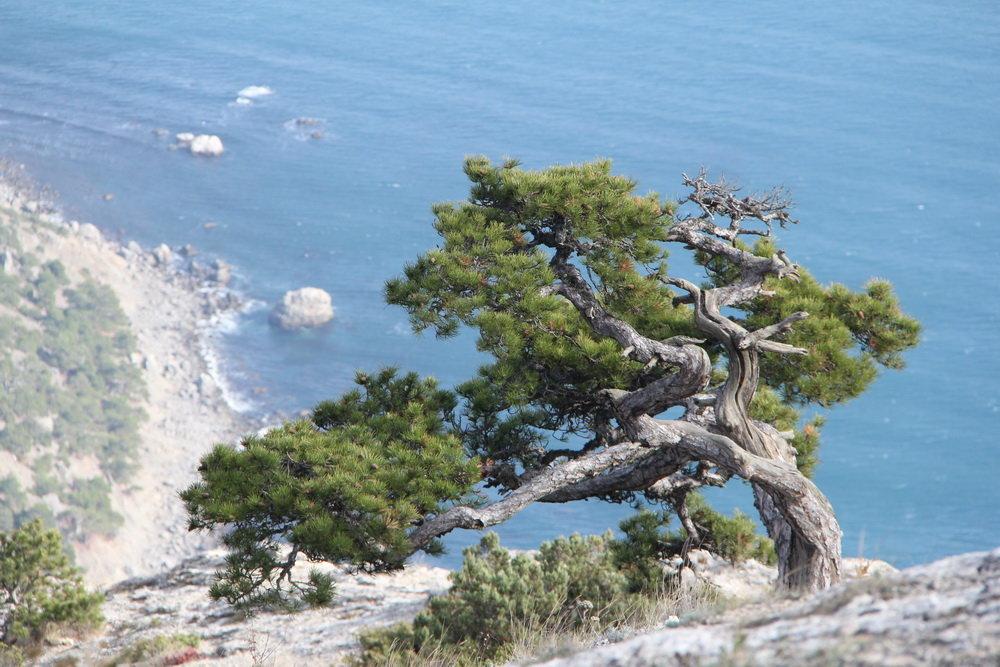 деревья крым названия фото седьмом сезоне
