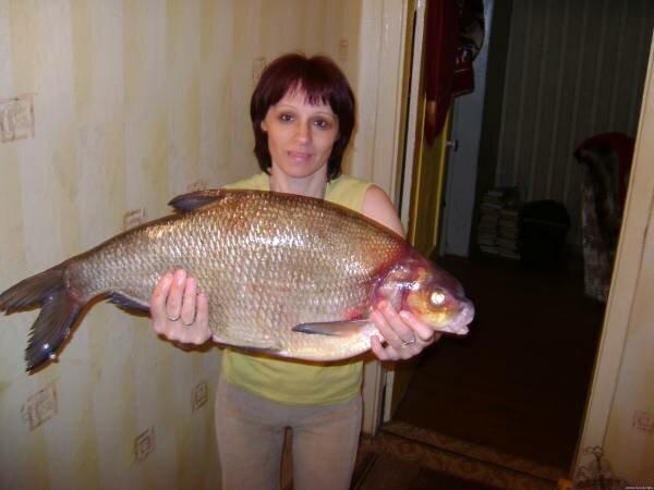 самый крупный лещ вес и фото адвокаты димитровград