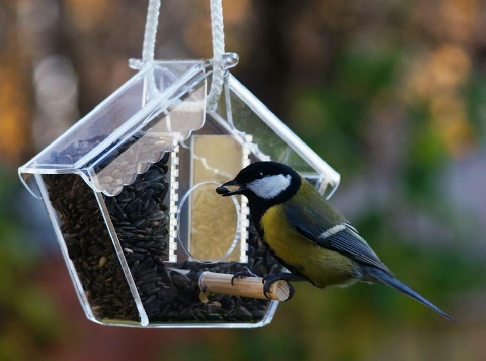 обустроить картинки птиц на кармушках рациональный