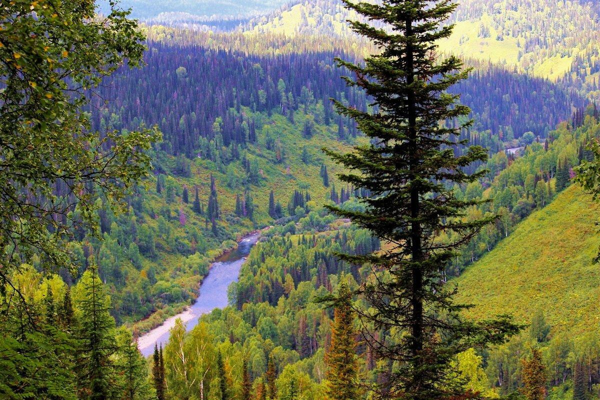 картинки тайга лес часть животного мира