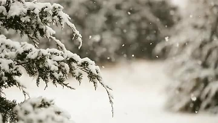 Гифы снега, прикольный