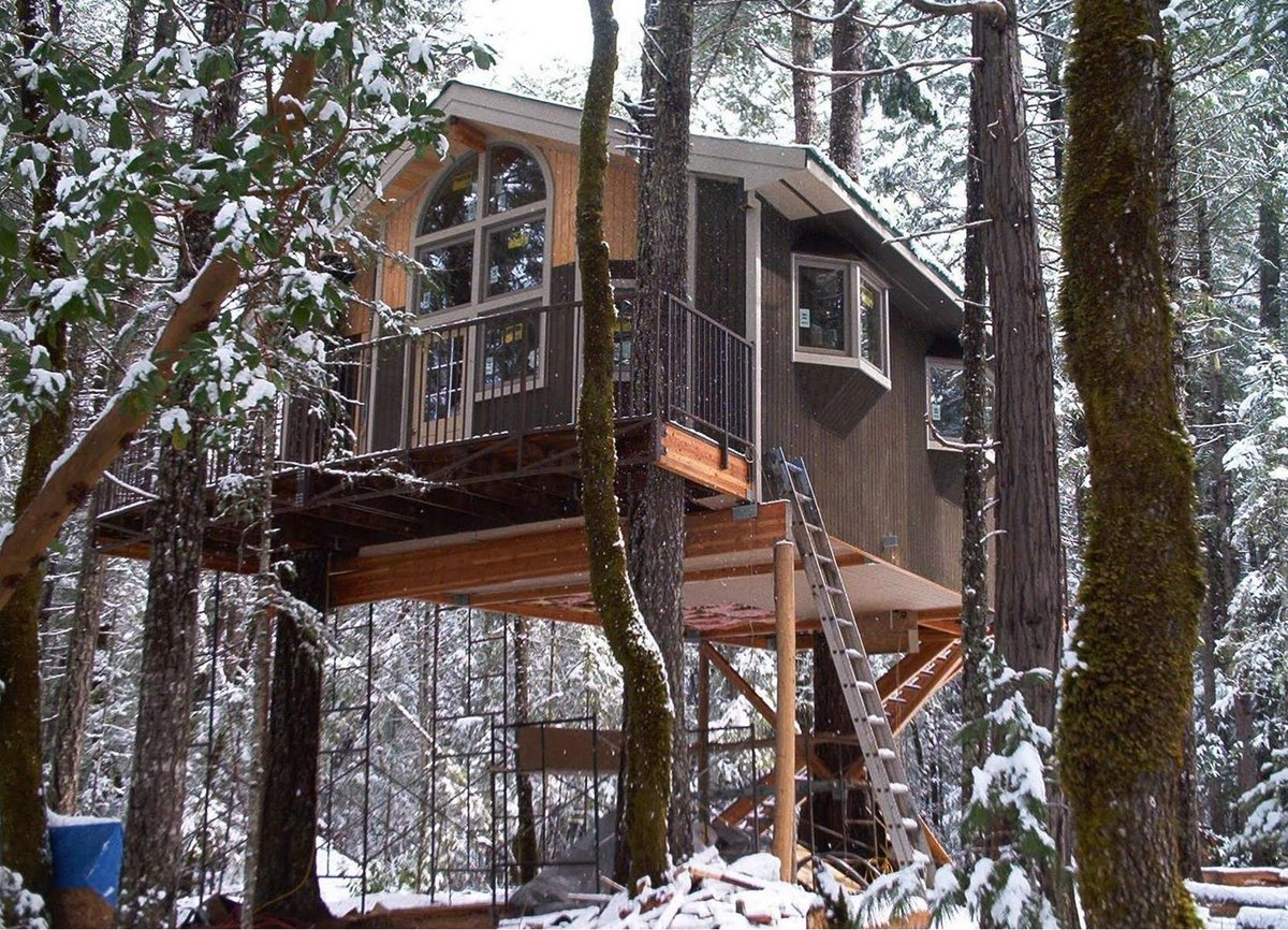 Дома на деревьях в россии фото