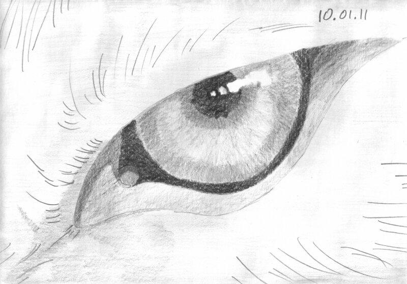 Глаза животных рисунки нарисованные