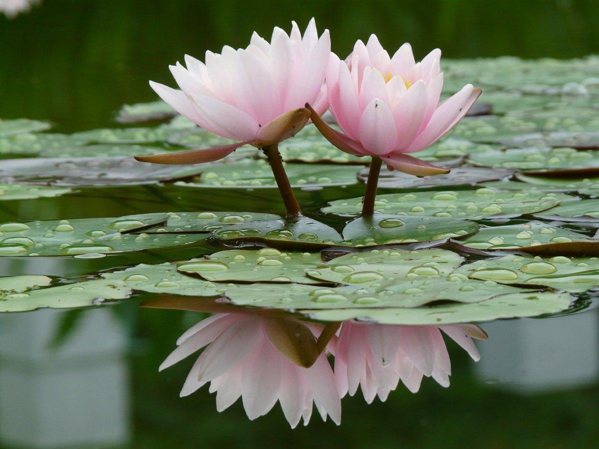 Живых открыток, цветы в воде картинки